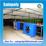 Invernadero Hoja Venlo PC con China precio de fábrica para el tomate