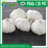 La alta calidad nueva cosecha de ajo fresco/- chino Shandong ajo