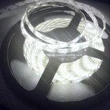 Striscia del LED nell'ambito dell'installazione di illuminazione del Governo