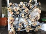 Chinese Fabriek Bevroren Zwarte Haai