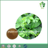 Extrait anti-vieillissement Gypenosides 80%-98% de Gynostemma