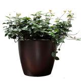 Vasos de fibra de vidro e a plantadeira para a decoração da casa e jardim