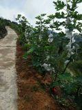 図の植わることのためのUnigrowの土肥料