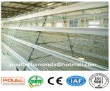 Cage de poulet de poule et d'éleveur de Hybird avec le système automatique de matériel pour l'exploitation d'élevage (un bâti)