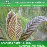 Выдержка Camptotheca Acuminata