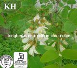100% naturel Sophora japonica extrait : 95%-98% de la quercétine