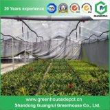 Maisons vertes en plastique de qualité pour l'agriculture avec système de refroidissement