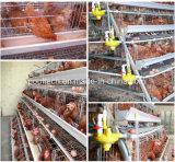 Quatre cage de batterie automatique de machines de ferme avicole de capacité des rangées 128