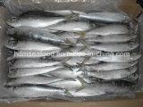 Vollständiges Fround Frozen Sardine Fish (Sardinella aurita)