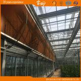 Glass a rendimento elevado Greenhouse para Agricultural Planting