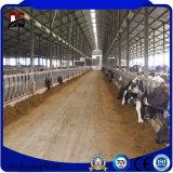 プレハブの鉄骨構造の酪農場の牛舎の家