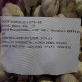 Verkoop Vers Knoflook Jinxiang met Hoogste Kwaliteit