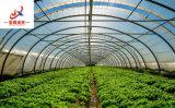 Tunnel-Sapn Gewächshaus mit Gemüse-Zucht