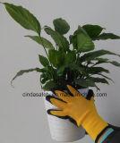 Cinda Calibre 10 Polyester enduit de latex Gants de jardinage