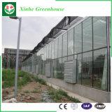 Парник пяди Muti коммерчески стеклянный для овоща и цветков