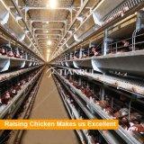 Prix complètement automatique de matériel de ferme avicole de poulet de la Chine