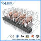 Schwein-züchtend Gerätehersteller, der Schwangerschaft-Rahmen Kanada verkauft