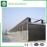 Invernadero agrícola de la hoja de la PC del surtidor de China en venta