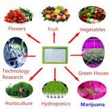 300 Вт Светодиодные лампы роста растений для вертикальной системы гидропоники