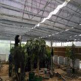 シェーディングシステムまたは水平のシェーディングシステム温室または温室のネットの中の温室