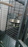 Quadratisches Gefäß-Hundehochleistungshaus
