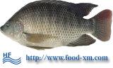 Tilapia van het Product van de Zeevruchten van de kwaliteit Zwarte Bevroren