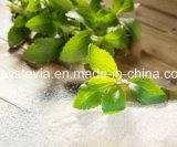 薬剤の原料の自然な甘味料のStevia