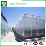 Invernadero de cristal de Venlo de los sistemas de control para el crecimiento del tomate