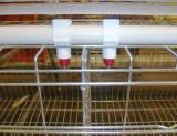 アルジェリア置く雌鶏の装置および家の5つの層