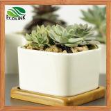 Verschiedenes Ceramic Succulent Pot mit Bamboo Tray
