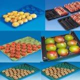 Nahrungsmittelgrad pp. und Haustier-Plastikwegwerfobst und gemüse Alveole-Tellersegment packend