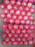 Prezzo rosso dolce fresco della Cina Shandong FUJI Apple del prodotto della frutta