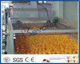 롤러 유형 과일 세탁기 솔 유형 세탁기