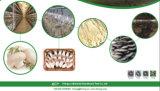 Modernes Pilzproduktionsgerät für Bauernhof