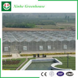 Парник листа поликарбоната земледелия для овощей/сада
