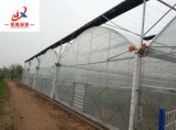 Multi-Span PC utilisé pour la plantation de légumes de serre