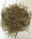Barato preço 6mm de fibras de basalto para cimento
