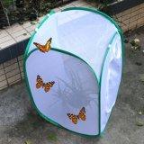 Kooi van de Vlinder van het Insect van het netwerk Pop omhoog Opvouwbare