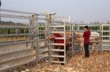 Écrasement galvanisé lourd de compression de bétail