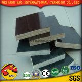 Película impermeável preto/castanho enfrentados/concreto/ Cofragem/contraplacado para construção