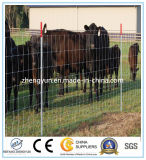 Pferdeartiger Zaun u. Zaun für Pferd