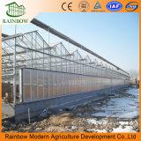トマトの耕作のための高品質のポリカーボネートシートの熱帯温室