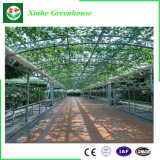Serre chaude en verre intelligente de Multispan pour la plantation
