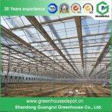 Handels - landwirtschaftliches Polycarbonat-Gewächshaus