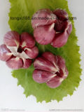 Alta qualidade de alho vermelha normal fresco