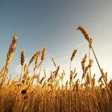Nevel van Fulvate van het kalium de Oplosbare Blad, de Agro Organische Fabriek van de Prijzen van de Meststof, het Zuur van K Fulvic