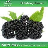 100% натуральные Elderberry извлечения (5% Anthocyanidins порошок)