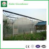 販売のための野菜か花またはフルーツのプラスチック温室