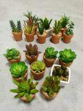 Piante e fiori artificiali della pianta succulente Gu809204553