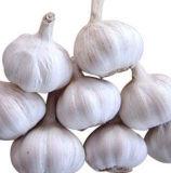 ail noir végétal de santé de 6.0cm pour l'exportation
